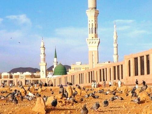 Madinah view